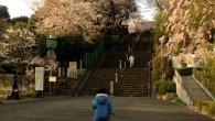 ●保育園帰りに池上本門寺へ。 桜咲き始めてます! ●今回は自力で階段を全部登りました。 残り10段辺りで抱っこモードになりましたが、 がんばって登らせました。 その方が、保育園の連絡帳に書き易い(笑) 途中名物猫の「ラッ […]