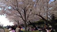●明け方一時間ウォーキング。  ●よく見ると店の名前が…(上段) 何屋か想像がつく名前(下段)  ●昼間、桜を観に土手へ。 今年は花見宴会に一つも参加出来なかった&#82 […]