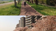 ●今日の明け方ウォーキングは、 土手を本気で歩いて30分で折り返してみました。 ガス橋緑地にギリ着く感じでした。 途中ゴミ処理場の桜がきれいでした。  ●昼間、嫁の仕事でお世話になっている カメ […]