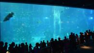 ●セントーサ島の水族館へ。 セントーサ島へ入ると入島料をとられます。 平日と休日で値段が違うみたいです。 世界一大きい水族館ということで見てみましたが お客さんは少ないし、どこが大きいのかな??と思ったら セントーサ島に […]