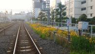 ●早朝ジョギング、糀谷方面へ6.5キロ ●東急蒲田の線路沿いの黄色い花が映える。 ●父の髄膜炎の症状も良くなって、 起き上がって新聞読んだり 食事も出来るように。 ただ心臓の働きが弱っているようで…