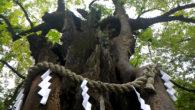 ●藤森稲荷神社。  ●しゃもじがたくさんお供えされているものの 詳細が不明。 調べてみたら「道祖神(おしゃもじさま)」でした。 ●東部八幡神社    ●新田神社のご神木。  […]